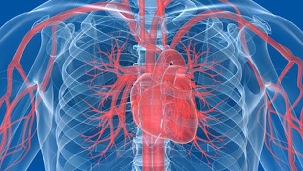 Сучасні аспекти профілактики ССЗ впродовж життя з використанням заходів з доведеною ефективністю